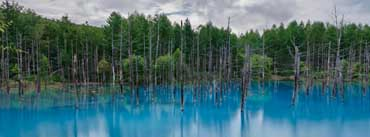 Flooded Forest Cover Photo