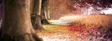 Forest Autumn Leaves Cover Photo