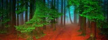 Forest Red Path Cover Photo