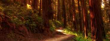 Forest Path Cover Photo