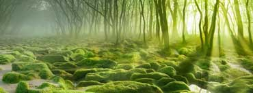 Green Sunrise Forest Cover Photo