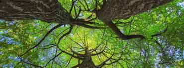 Green Ginkgo Trees Cover Photo