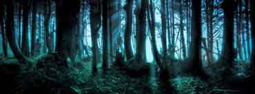 Mysterious Forest Cover Photo