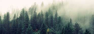 Morning Foggy Forest Cover Photo