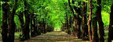 Green Trees Forest Cover Photo