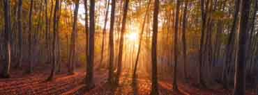 Warm Sunrise Forest Cover Photo