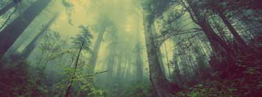 Foggy Forest Cover Photo