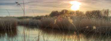 Sunset At Bieslandse Forest Cover Photo