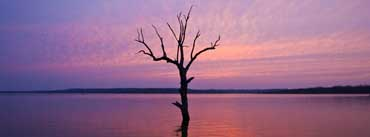 Tree In The Lake Sunset Cover Photo