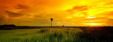 Beautiful Yellow Sunset Cover Photo