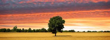 Lone Tree Cover Photo