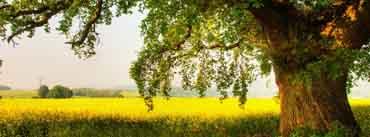 Oak Tree Cover Photo