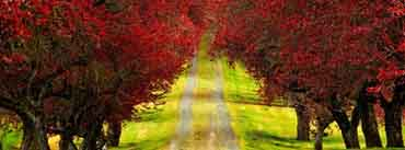 Red Foliage Trees Road Cover Photo