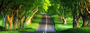 Summer Road Forest Cover Photo