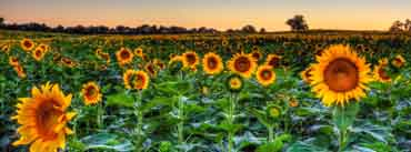 Sunflower Field Sunset Cover Photo