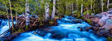 Forest Birch Stream Long Exposure Cover Photo