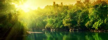Lush Green Forest River At Sunrise Cover Photo
