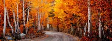 California Autumn Cover Photo