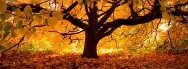 Autumn Tree Cover Photo