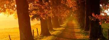 Autumn Walk Path Cover Photo