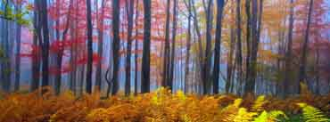 Beautiful Colored Trees Cover Photo