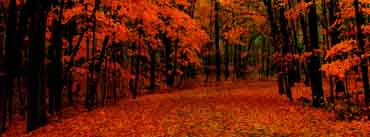 Fall Red Path Cover Photo