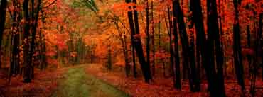 Orange Forest Cover Photo