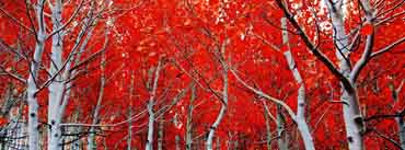 Red Autumn Cover Photo