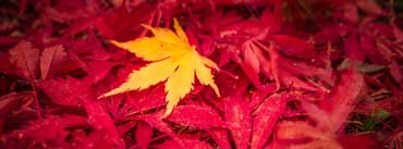 Yellow Fall Leaf Cover Photo