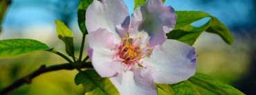 Beautiful Blossom Macro Cover Photo