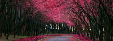 Blooming Trees Alley Cover Photo