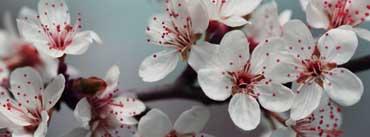 Blossom Cover Photo