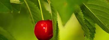 Cherry Fruit Tree Cover Photo