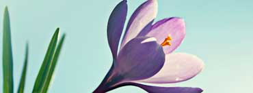 Crocus Flower Cover Photo