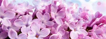 Lilac Macro Cover Photo
