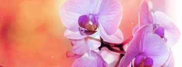 Orchid Flowers Cover Photo