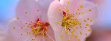 Plum Blossom Macro Cover Photo