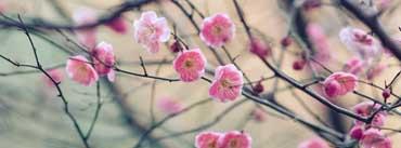 Plum Blossom Cover Photo