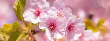 Spring Awakening Cover Photo