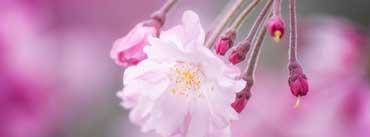 Spring In Japan Cover Photo