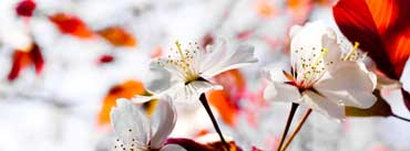 Spring Season Flowers Cover Photo