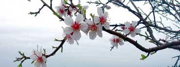 Spring Season Cover Photo