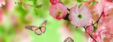 Springtime Joy Cover Photo