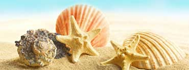 Seashells And Stars Cover Photo