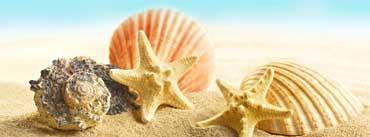 Seashells And Stars Cover Photo