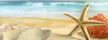 Starfish On The Beach Cover Photo