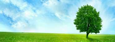 White Dandelion Field Cover Photo