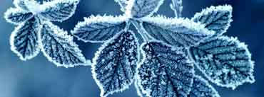 Frozen Leaves Cover Photo