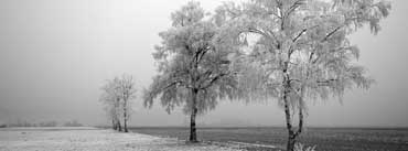 Frozen Trees Cover Photo