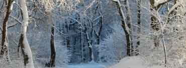 Into The Forest Winter Cover Photo